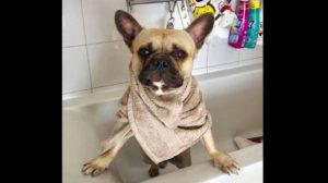 come lavare il cane