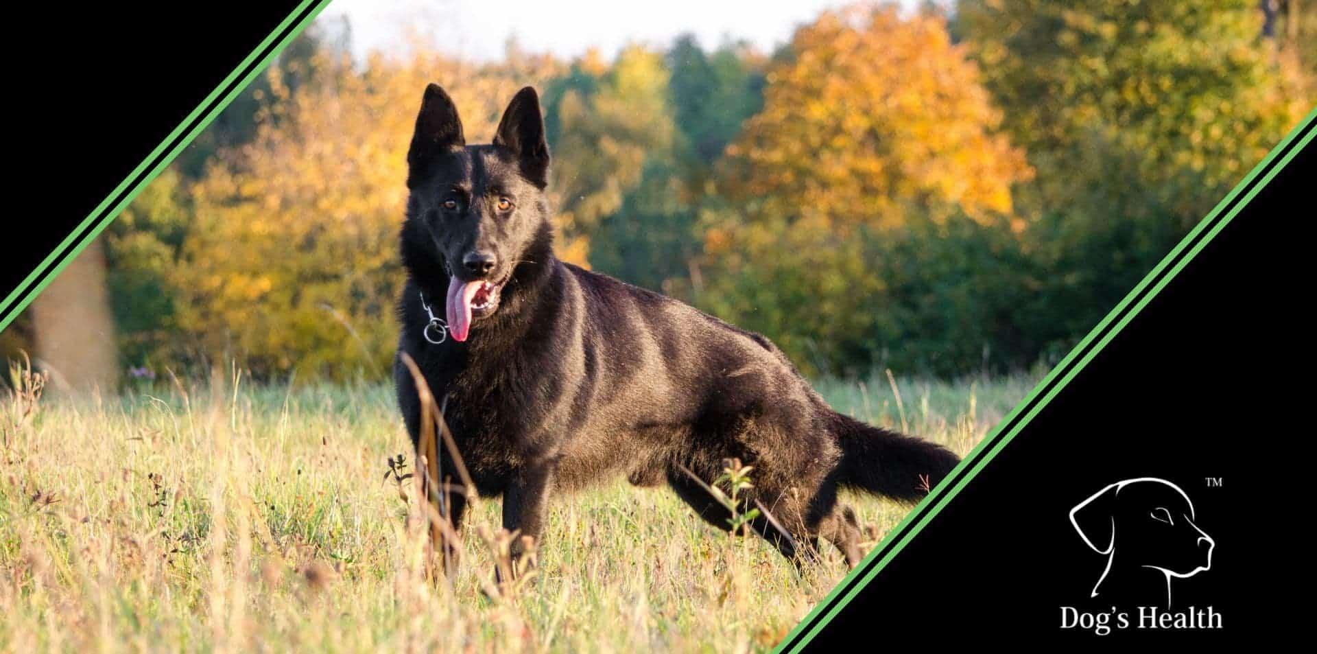 forasacco cane naso orecchie sintomi