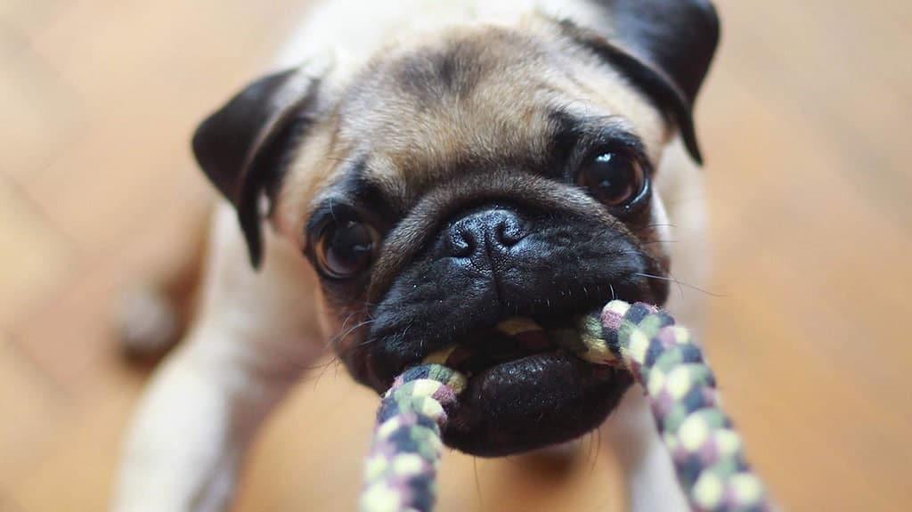 come educare un cucciolo a non mordere