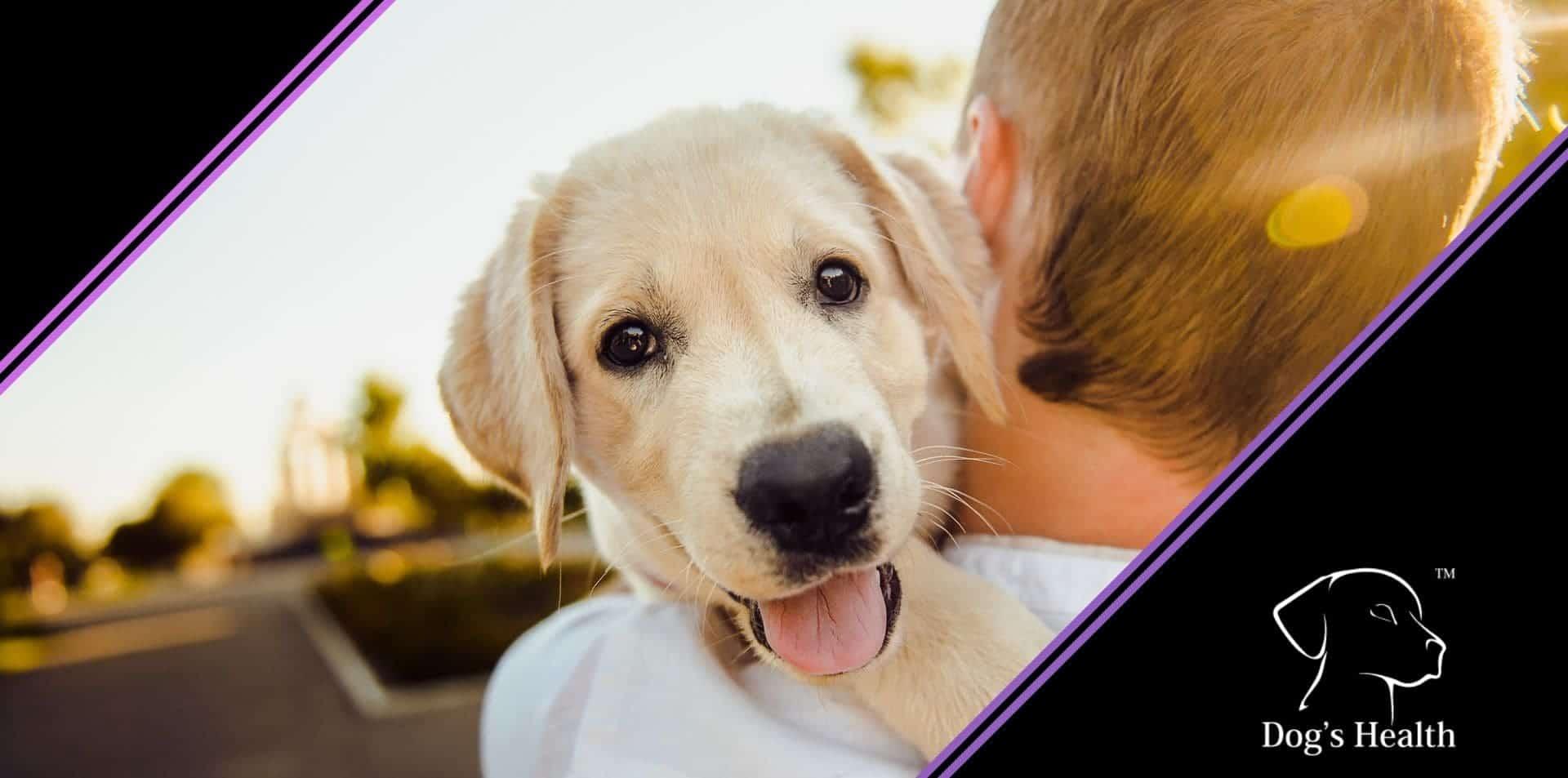 come educare un cucciolo di cane