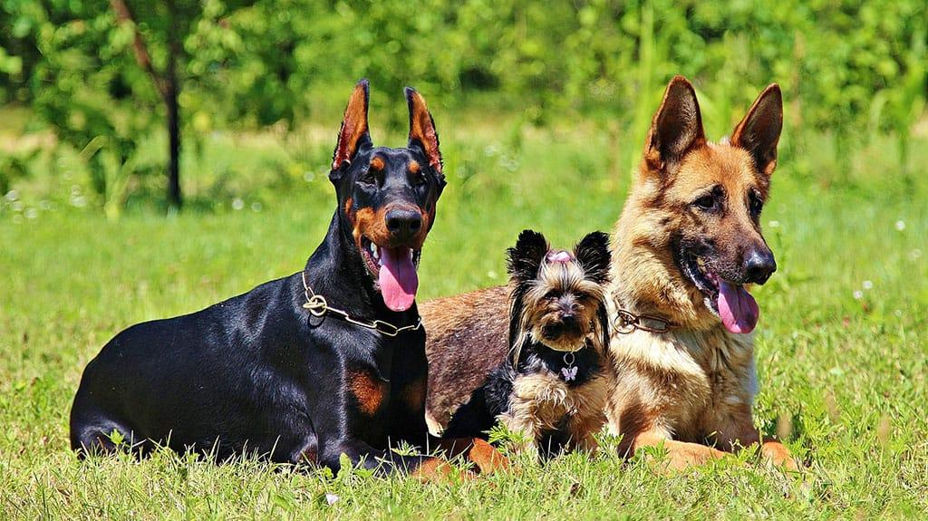 come educare un cucciolo di pastore tedesco