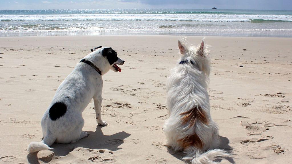 lucidare il pelo del cane al mare