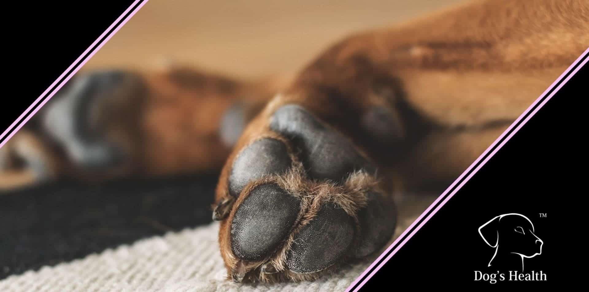 come pulire le zampe del cane dopo la passeggiata