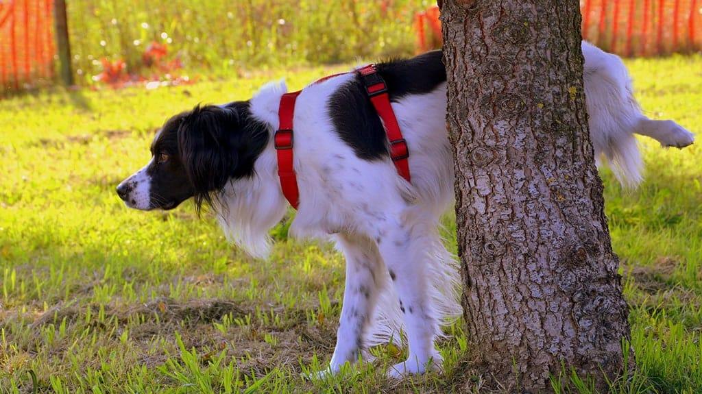 pulire zampe cane a pelo lungo
