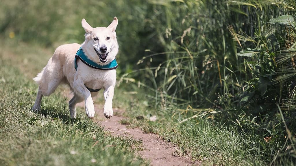 pulire zampe cane da terra e fango