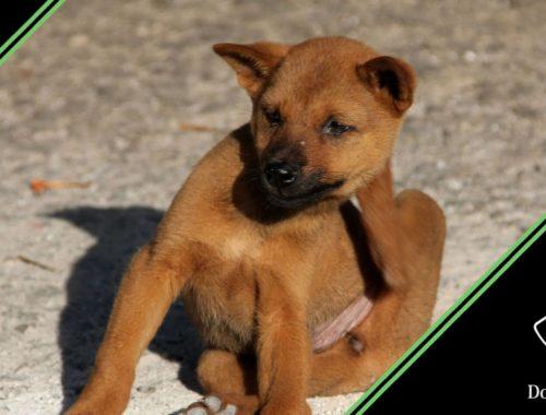 prurito cane cause sintomi cura