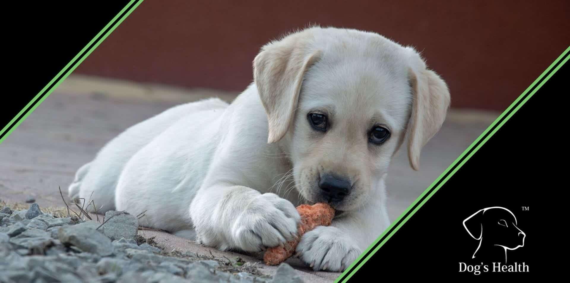 prurito intolleranze allergie alimentari del cane