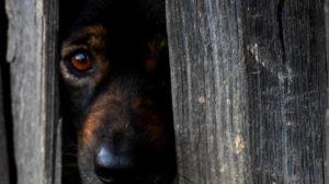 cane spaventato temporale botti