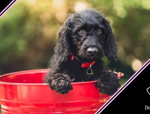 come lavare il cane a secco