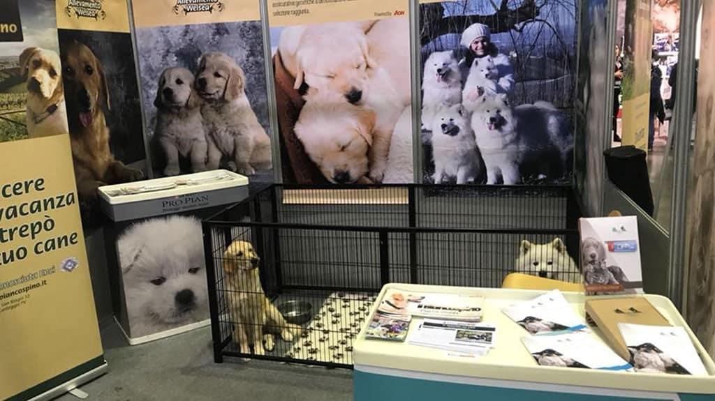 kennel recinto per cani