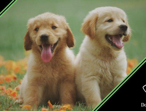 articolazioni cane cucciolo prevenzione malattie