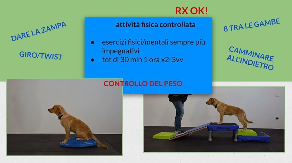 attività fisica articolazioni cane cucciolo