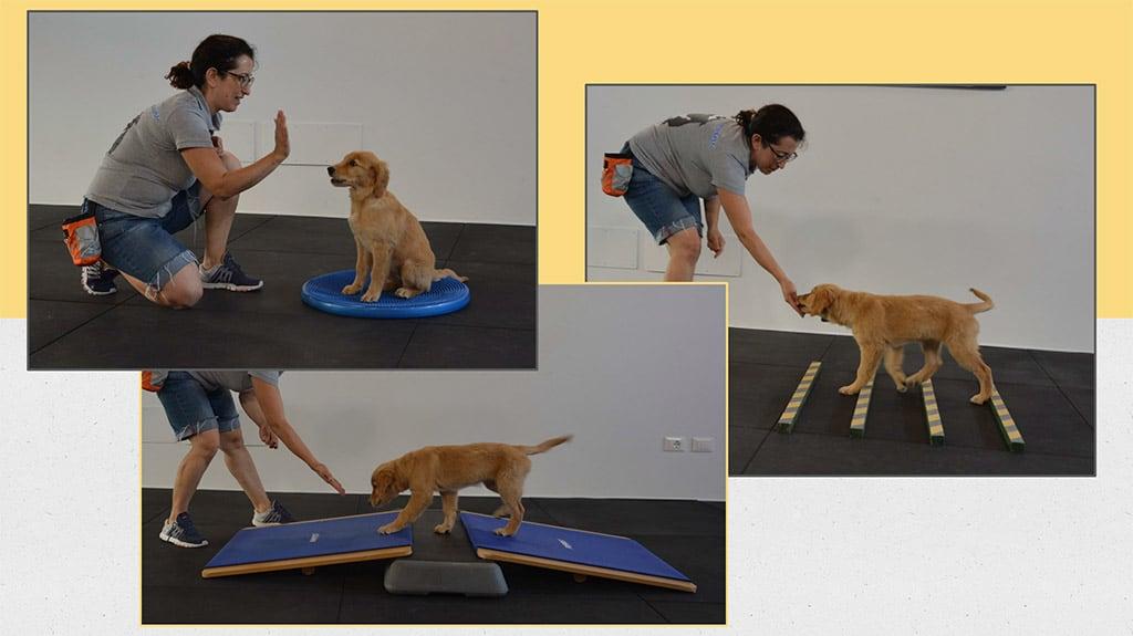 movimento corretto per articolazioni del cane