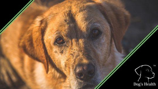 malassezia cane diagnosi cura