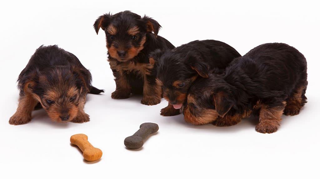 crocchette cibo industriale per cani