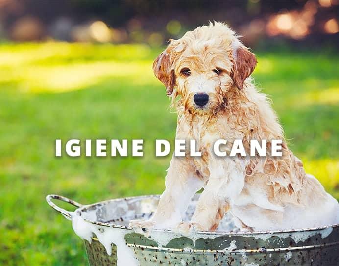 igiene del cane Dog's Health