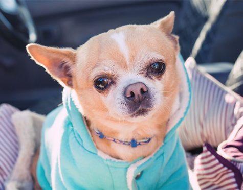 dogs health prodotti per la cura del cane