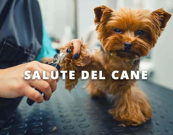 salute del cane Dog's Health