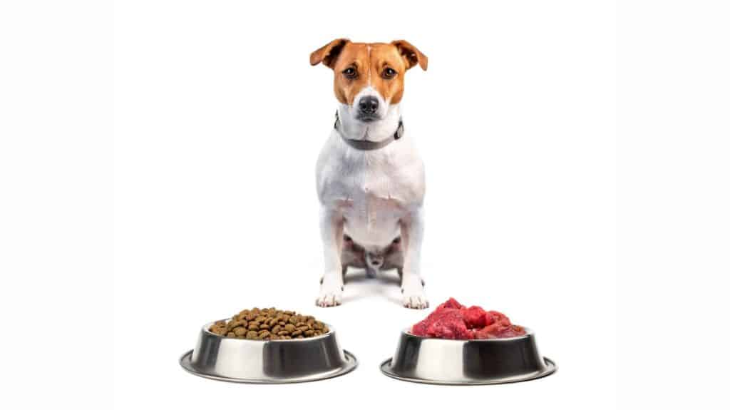 cibi per cane secchi e freschi