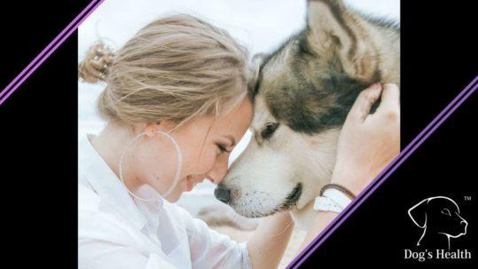 come scegliere un cane da adottare