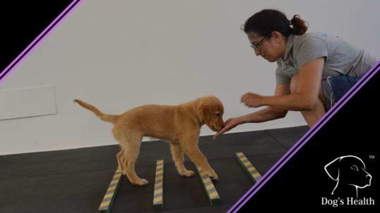 giochi di attivazione mentale per cani