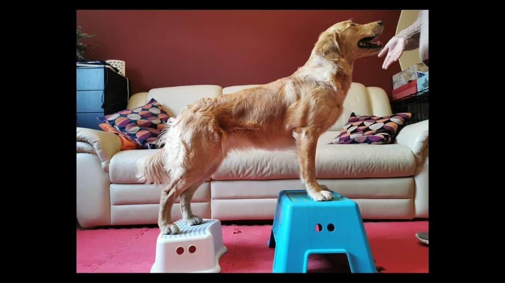 giochi mentali per cani da fare in casa
