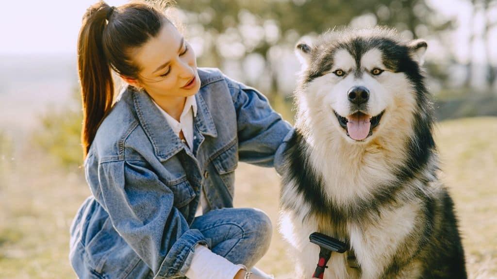 pulire cani a pelo lungo