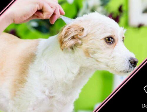 antiparassitario al cane prima e dopo il bagno