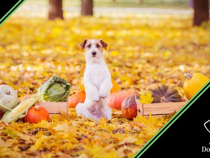 snack per cani frutta e verdura