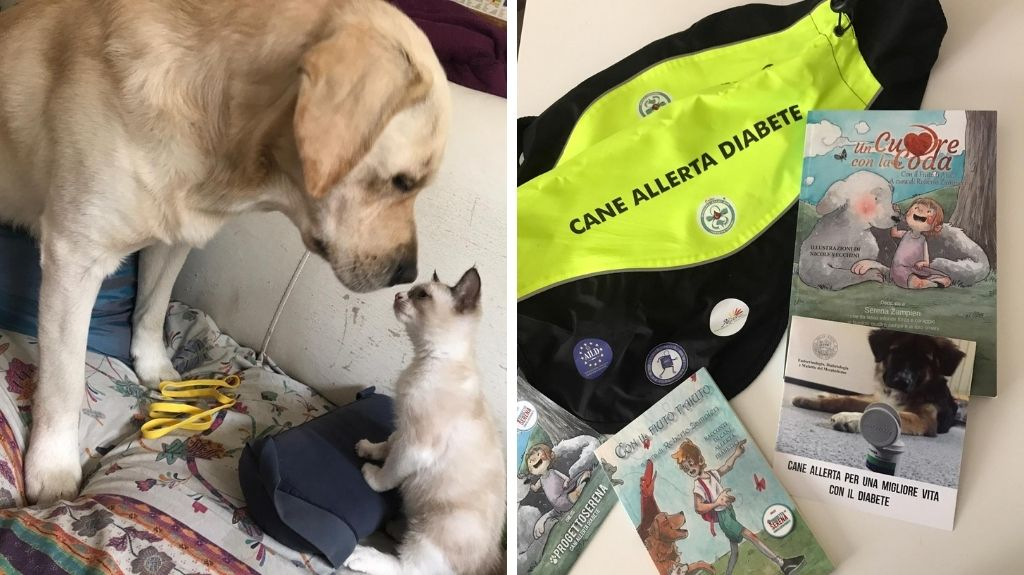 cane e gatto pet therapy