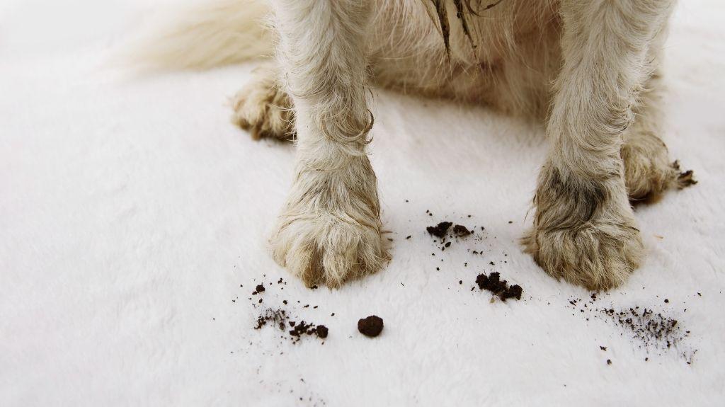 zampe sporche cane