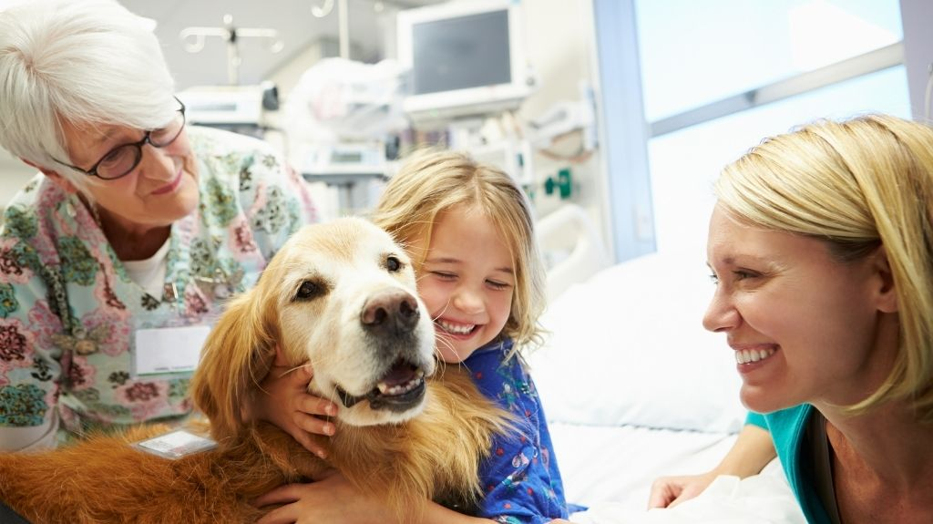 dental dog therapy