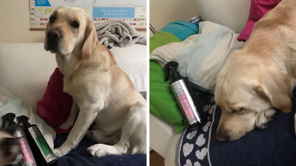 prodotti delicati igiene cane da pet therapy