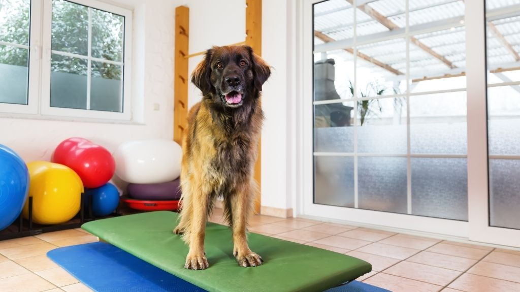 artrosi cane fisioterapia esercizi