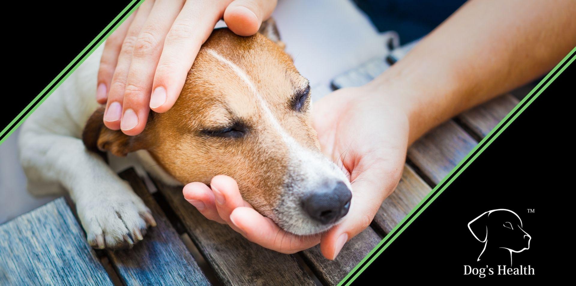 artrosi cane sintomi terapia