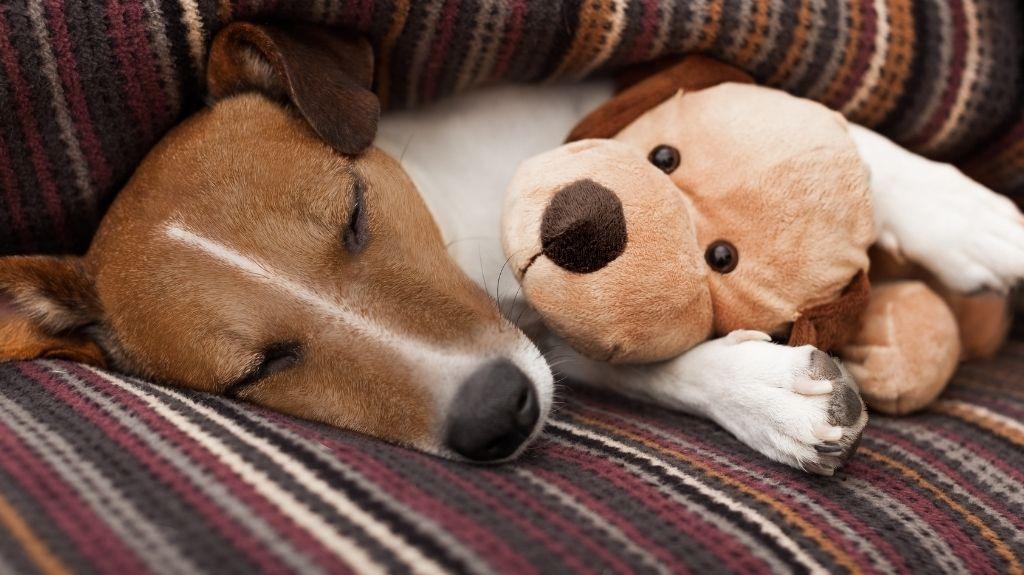 cane dorme di notte non abbaia