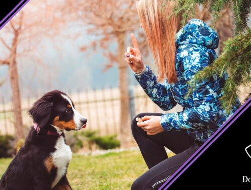 far smettere di abbaiare un cane