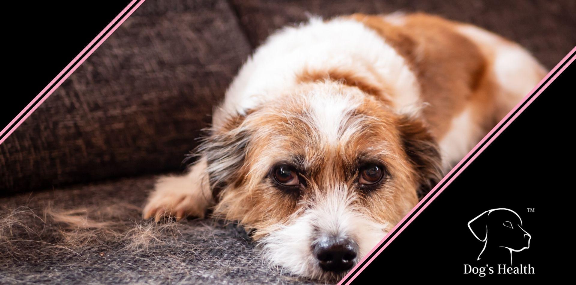peli di cane in casa